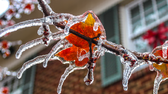 Close up of a tree branch and a leaf covered in ice