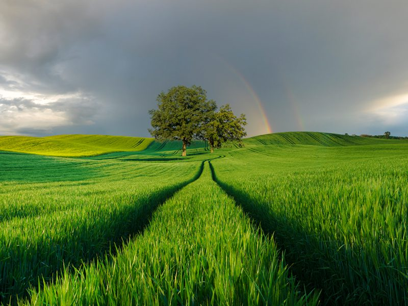 Green field with tree showing a rainbow and stormy skies in the background.
